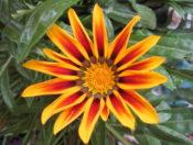 Flower Pic For Gardening Post
